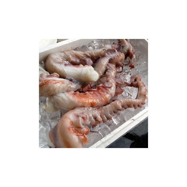水たこ足(生冷凍) 1本 約500-590g程度 (浜坂産) タコ、ミズダコ