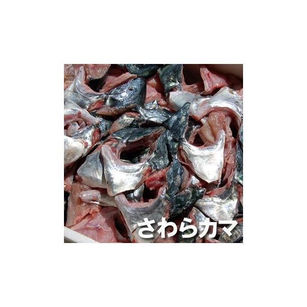 (送料無料セール)寒ザワラのカマ(冷凍) 約1kg  (浜坂産)一年で最も脂がのった時期のサワラのカマです (寒ざわら、さわら、鰆)