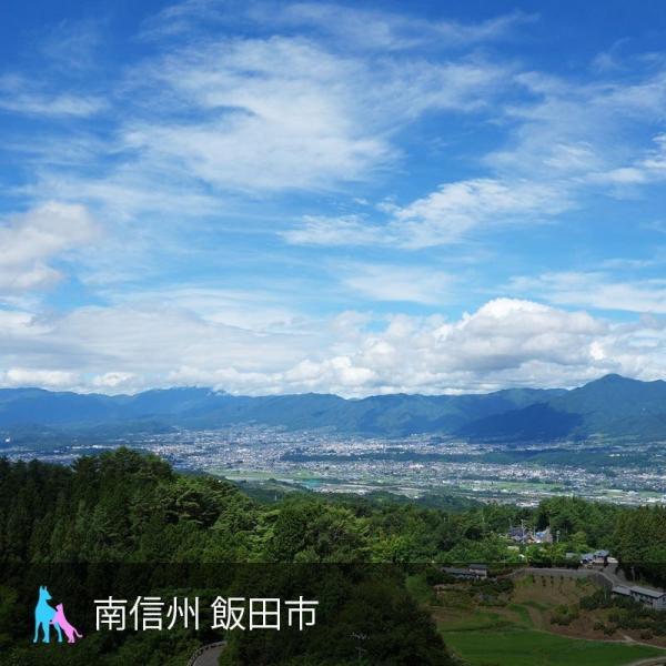 犬猫の冬虫夏草サプリメント プライオ45g 免疫力の健康維持 ペット用|medinex|06