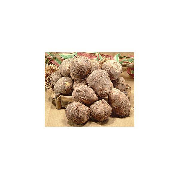 上庄の里芋(さといも)5kg入 小粒 Sサイズ 小さい 福井県大野市 上庄 ブランド 里いも(サトイモ)里イモ