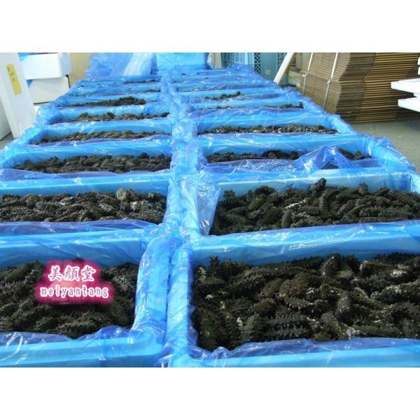 お一人様2点限り 激安セール 北海道産 乾燥なまこ ナマコ 500g 特A品S 海参 なまこ 売切御免|meiyantang|06