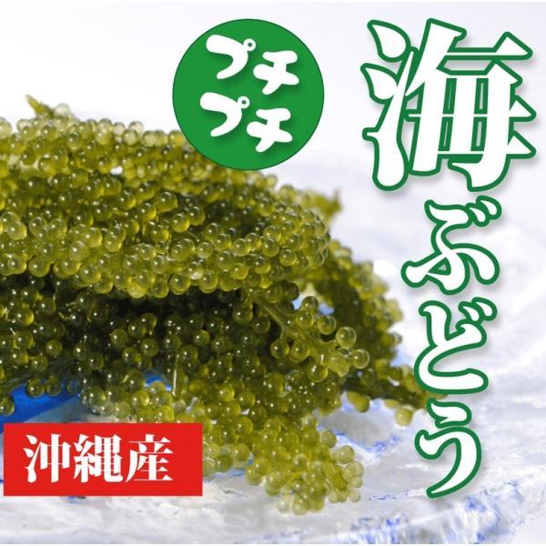 海ぶどう 沖縄県産 活海ぶどう 50g×10個セット 沖縄産 お土産 お土産|mejapon|02