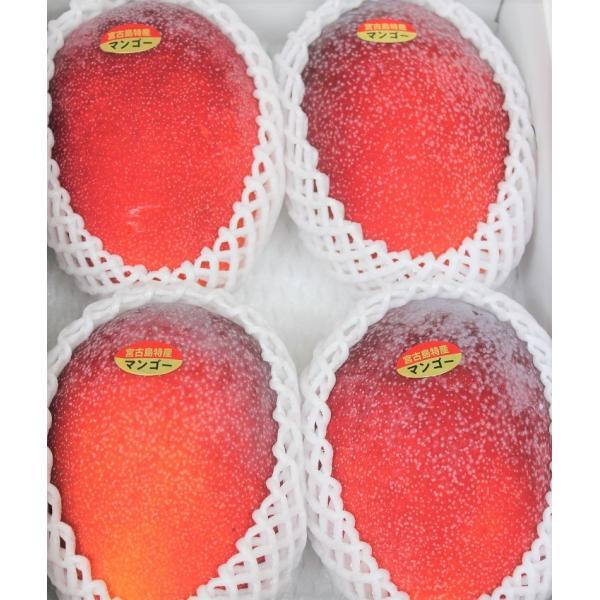 贈答用秀品 沖縄県産 完熟マンゴー 約2kg 化粧箱入 最高級品 送料無料 発送7月上旬〜8月下旬