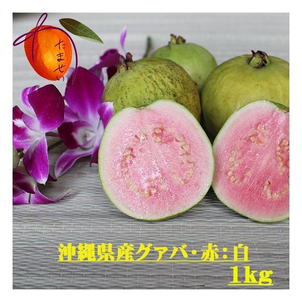沖縄県産 グァバ 約1kg 赤・白どちらになるかはお任せになります。【配達日指定不可】【発送時期7月末〜9月】