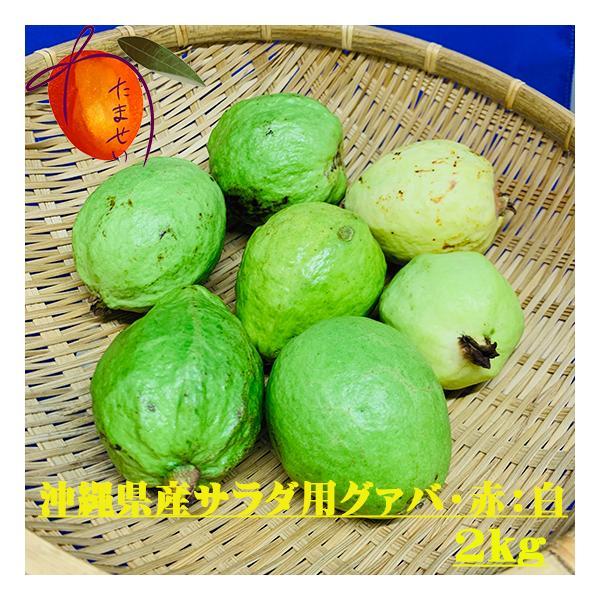沖縄県産 グァバ (サラダ用)約2kg 赤・白どちらになるかはお任せになります。【配達日指定不可】【発送時期7月末〜9月】
