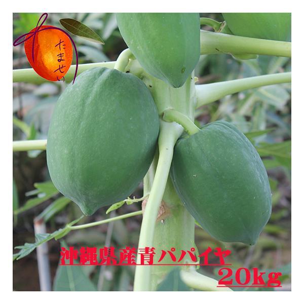 沖縄県産青パパイヤ約20kg  【夏季はチルド便でお届けします。】 青パパイヤは栄養価が高く健康維持に大切な酵素を豊富に含んでいます。