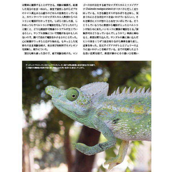 第2号 両生類・爬虫類専門雑誌『Caudata(カウダータ)』 【ネコポス便のみ】|metaledit|04