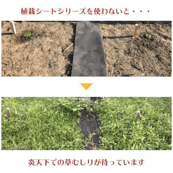 クラピア専用マルチシートセットお庭用 シート1m×12m(12m2)+ U字型ピン(50本) クラピア K7 K5 S2 ポット苗用 植栽用 吸水性 透水性 アップ|midoris|05