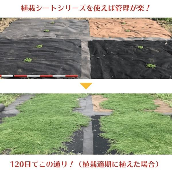 クラピア専用マルチシートセットお庭用 シート1m×12m(12m2)+ U字型ピン(50本) クラピア K7 K5 S2 ポット苗用 植栽用 吸水性 透水性 アップ|midoris|06