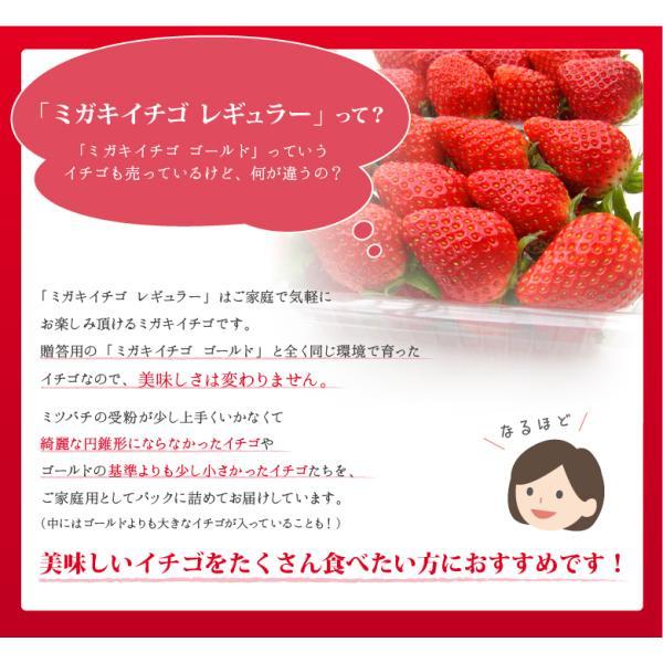 いちご ミガキイチゴ スタンダード(ご自宅用) 2パック 275g以上×2|migaki-ichigo|03