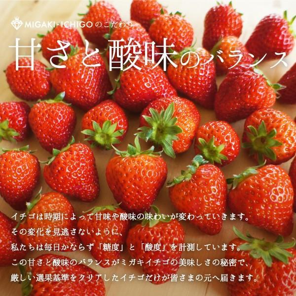 いちご ミガキイチゴ スタンダード(ご自宅用) 2パック 275g以上×2|migaki-ichigo|04