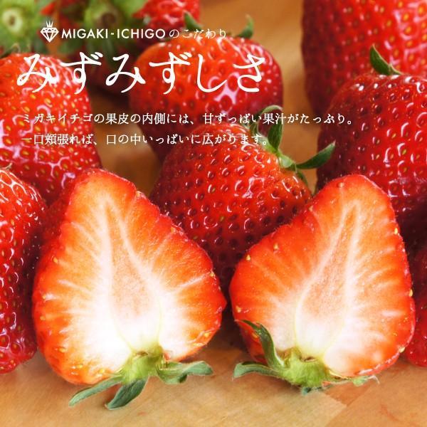 いちご ミガキイチゴ スタンダード(ご自宅用) 2パック 275g以上×2|migaki-ichigo|05