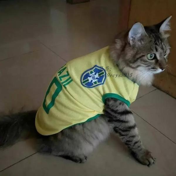 夏クール猫ベスト服サッカーユニフォームスポーツペット Tシャツ小型猫 Tシャツキティ衣装 XS XXL グループ上 ホーム ガーデン から 猫 服 中 miistore 06
