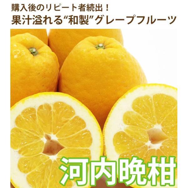 河内晩柑 みかん 和製 グレープフルーツ 訳あり 2kg 送料無料 2セット購入で1セットおまけ|mikan-hana|02