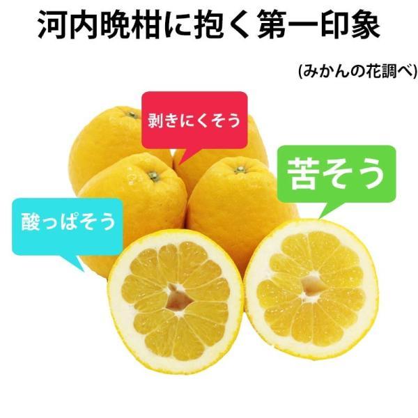 河内晩柑 みかん 和製 グレープフルーツ 訳あり 2kg 送料無料 2セット購入で1セットおまけ|mikan-hana|03
