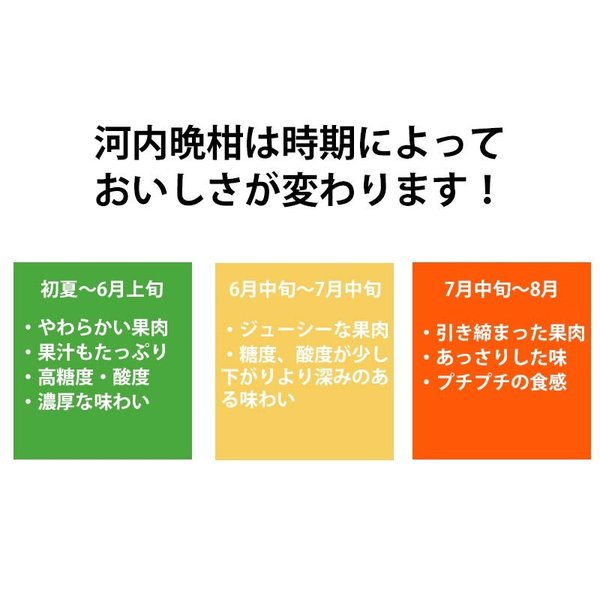 河内晩柑 みかん 和製 グレープフルーツ 訳あり 2kg 送料無料 2セット購入で1セットおまけ|mikan-hana|07