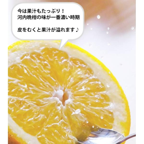 河内晩柑 みかん 和製 グレープフルーツ 訳あり 2kg 送料無料 2セット購入で1セットおまけ|mikan-hana|08