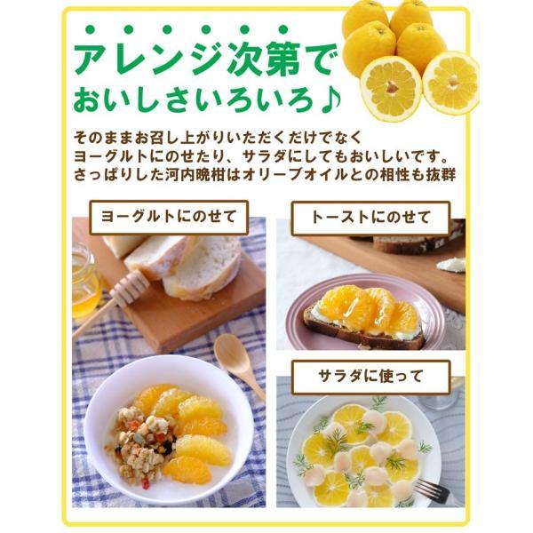 河内晩柑 みかん 和製 グレープフルーツ 訳あり 2kg 送料無料 2セット購入で1セットおまけ|mikan-hana|09