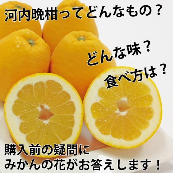 河内晩柑 ナダオレンジ 美生柑 秀品2kg 愛媛産 和製グレープフルーツ mikan-hana 02