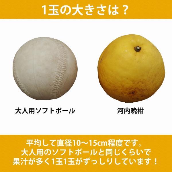 河内晩柑 ナダオレンジ 美生柑 秀品2kg 愛媛産 和製グレープフルーツ mikan-hana 03