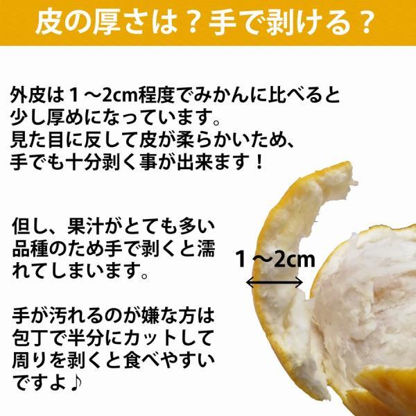 河内晩柑 ナダオレンジ 美生柑 秀品2kg 愛媛産 和製グレープフルーツ mikan-hana 04