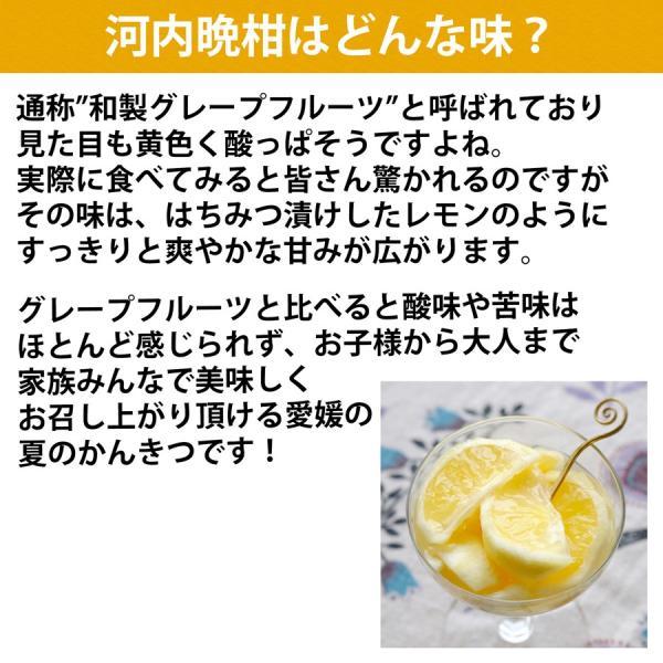 河内晩柑 ナダオレンジ 美生柑 秀品2kg 愛媛産 和製グレープフルーツ mikan-hana 05