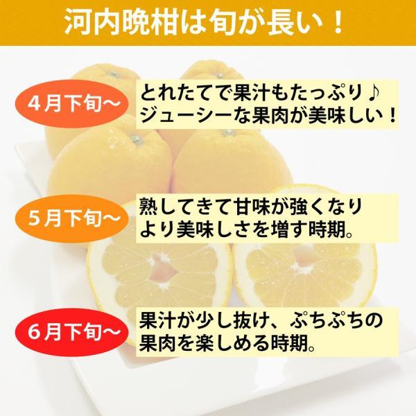 河内晩柑 ナダオレンジ 美生柑 秀品2kg 愛媛産 和製グレープフルーツ mikan-hana 06