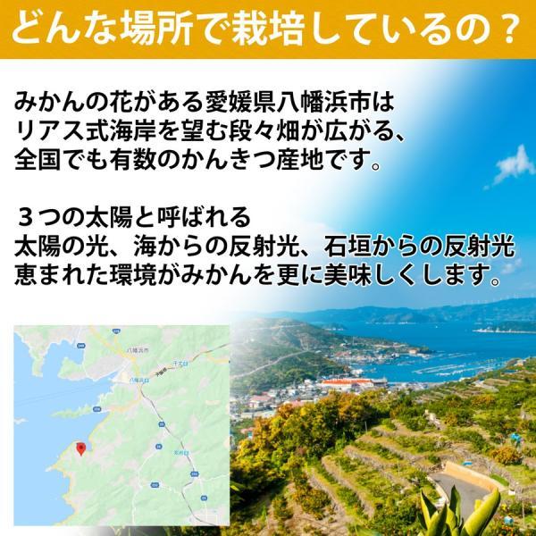 河内晩柑 ナダオレンジ 美生柑 秀品2kg 愛媛産 和製グレープフルーツ mikan-hana 08