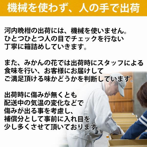 河内晩柑 ナダオレンジ 美生柑 秀品2kg 愛媛産 和製グレープフルーツ mikan-hana 09