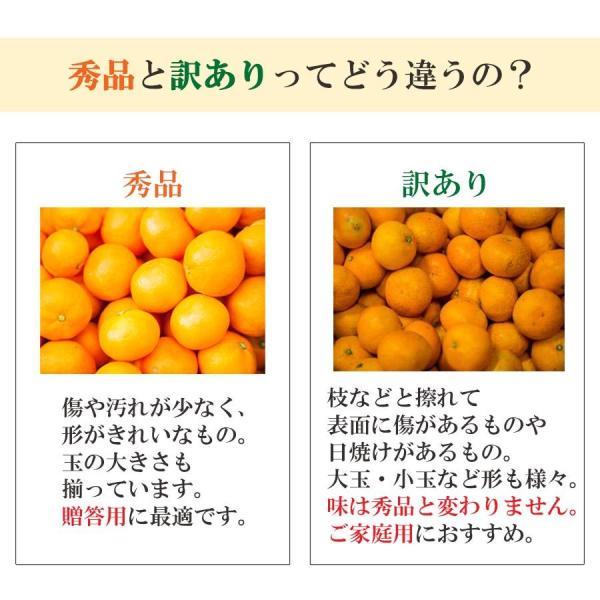 みかん ミカン 訳あり 送料無料 10kg 極早生 愛媛みかん|mikan-hana|06