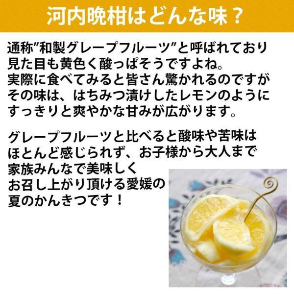 河内晩柑 みかん 和製 グレープフルーツ 訳あり 7kg 送料無料 愛媛産 15〜25個入り|mikan-hana|02