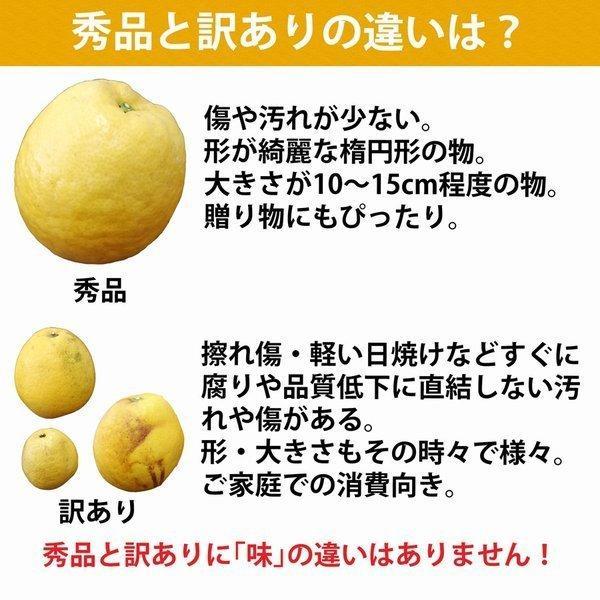 河内晩柑 みかん 和製 グレープフルーツ 訳あり 7kg 送料無料 愛媛産 15〜25個入り|mikan-hana|04