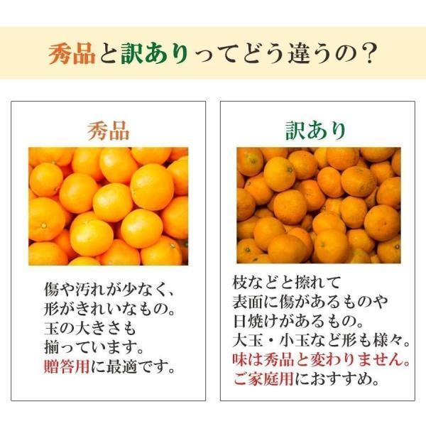 河内晩柑 みかん 和製 グレープフルーツ 訳あり 7kg 送料無料 愛媛産 15〜25個入り|mikan-hana|06