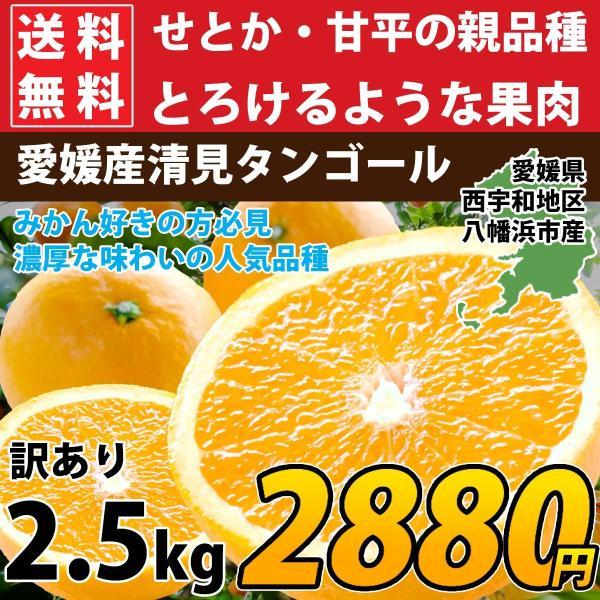 清見 みかん 清見 愛媛産 訳あり 約2.5kg 2箱購入で1kg増量 産地直送|mikan-hana