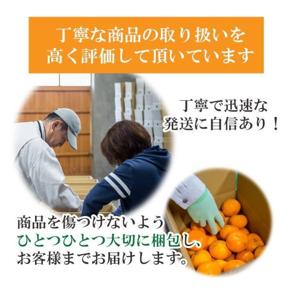 清見 みかん 清見 愛媛産 訳あり 約2.5kg 2箱購入で1kg増量 産地直送|mikan-hana|06