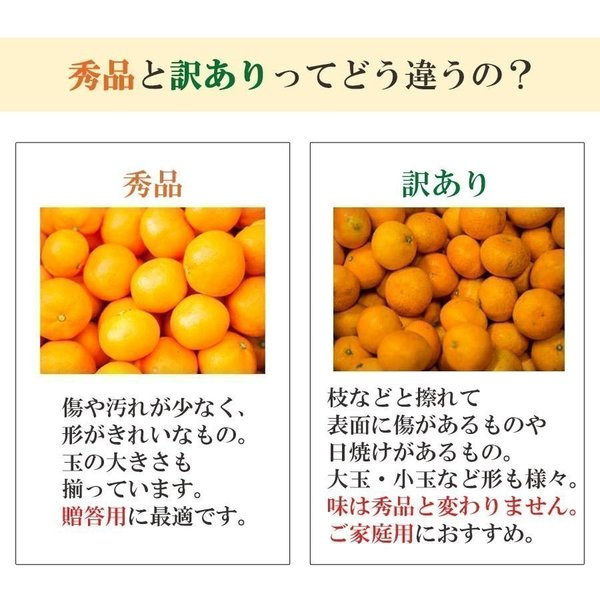 清見 みかん 清見タンゴール 清見 愛媛産 訳あり 約5kg 産地直送 送料無料 mikan-hana 06