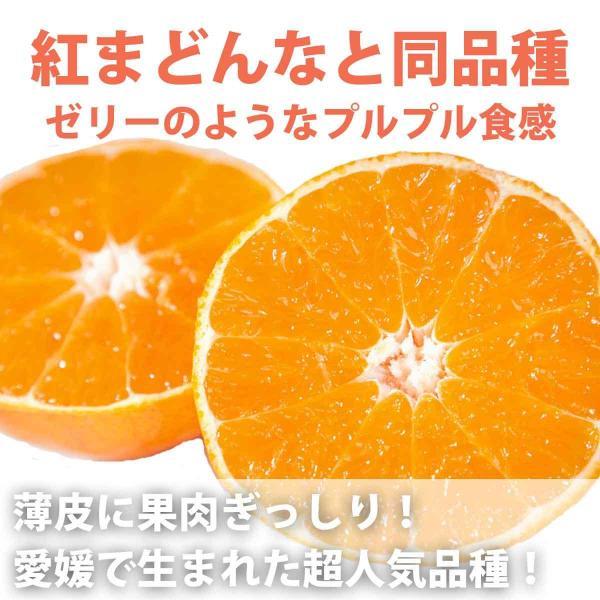 まごころまどんな(愛媛果試28号)  訳あり(約3kg)  産地直送 送料無料|mikan-hana|02