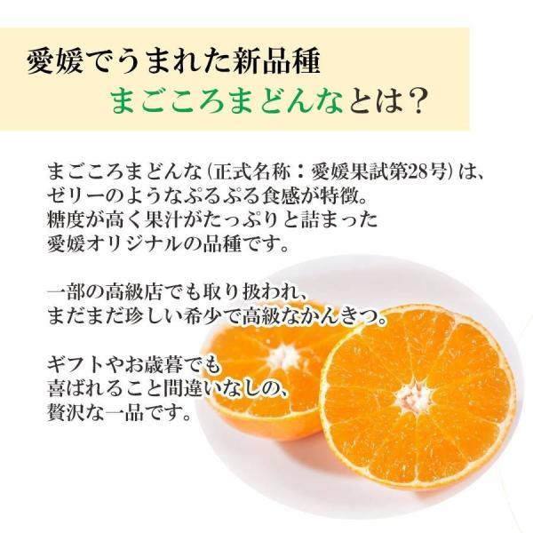 まごころまどんな(愛媛果試28号)  訳あり(約3kg)  産地直送 送料無料|mikan-hana|03