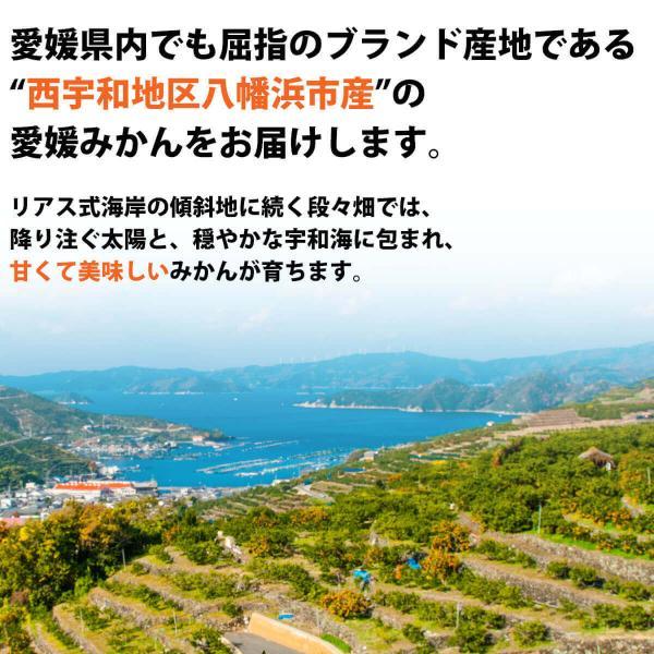 みかん 愛媛産 秀品 3kg 送料無料 3営業日以内に出荷 mikan-hana 05