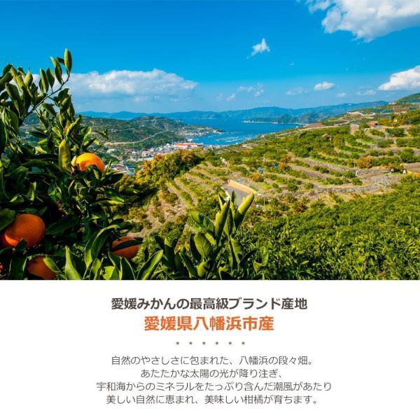 母の日 愛媛みかん 寒天ゼリー オールスター食べ比べセット 170g×12本 全11種|mikan-hana|04