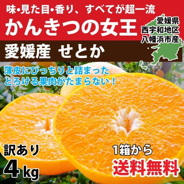 みかん せとか 愛媛産  訳あり 3kg 送料無料 3営業日以内に発送|mikan-hana