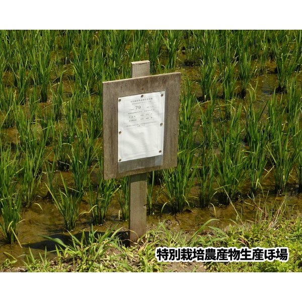 【2020年度産】山形県米沢産 コシヒカリ 超低農薬米 5kg (白米)上杉藉田米 minorinokai 02