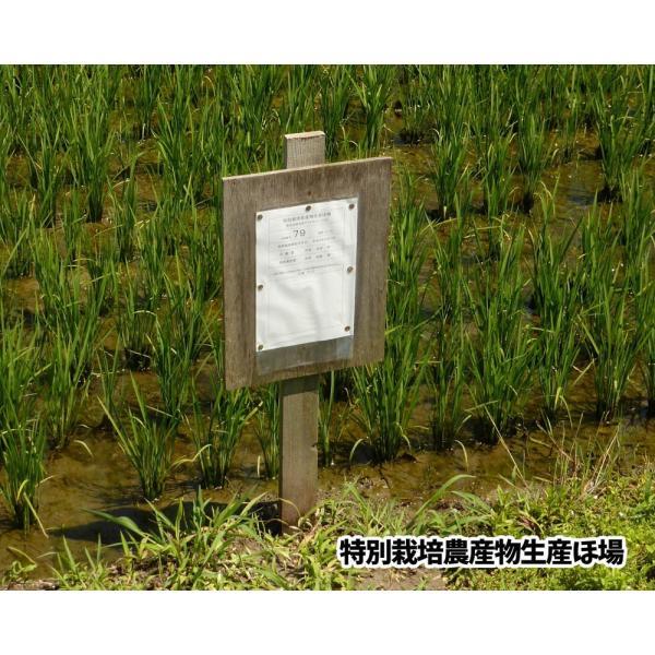 【2020年度産】山形県米沢産 コシヒカリ 超低農薬米 5kg (玄米)上杉藉田米|minorinokai|02