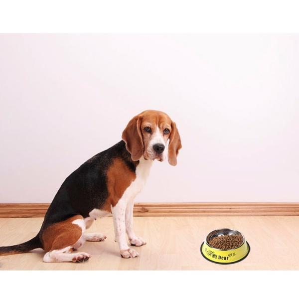 ペット 犬 猫 食器 フードボール ステンレス食器 ペットボウル 餌入れ ウォーターボウル 可愛い ペット グッズ 猫 小型犬 中型犬 小動物 宅配便送料無料|missbeki|17