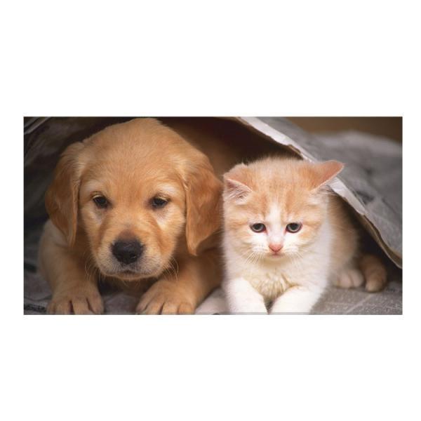 ペット 犬 猫 食器 フードボール ステンレス食器 ペットボウル 餌入れ ウォーターボウル 可愛い ペット グッズ 猫 小型犬 中型犬 小動物 宅配便送料無料|missbeki|06
