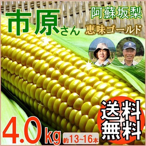 とうもろこし 熊本 阿蘇 お中元 ギフト スイートコーン 市原さん 恵味ゴールド 4.0.kg