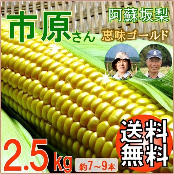 とうもろこし 熊本 阿蘇 お中元 ギフト スイートコーン 市原さん 恵味ゴールド 2.5kg