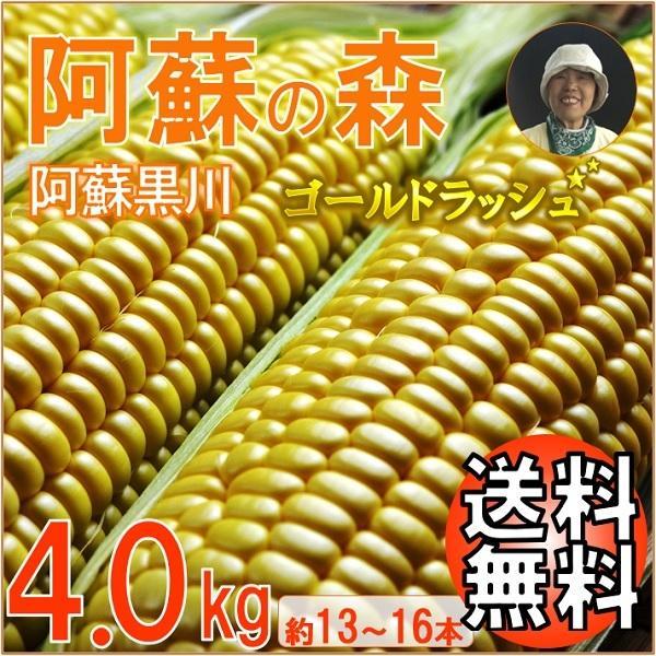 お中元 熊本 阿蘇 ギフト とうもろこし スイートコーン 阿蘇の森 ゴールドラッシュ 4.0kg|mitinoekiaso