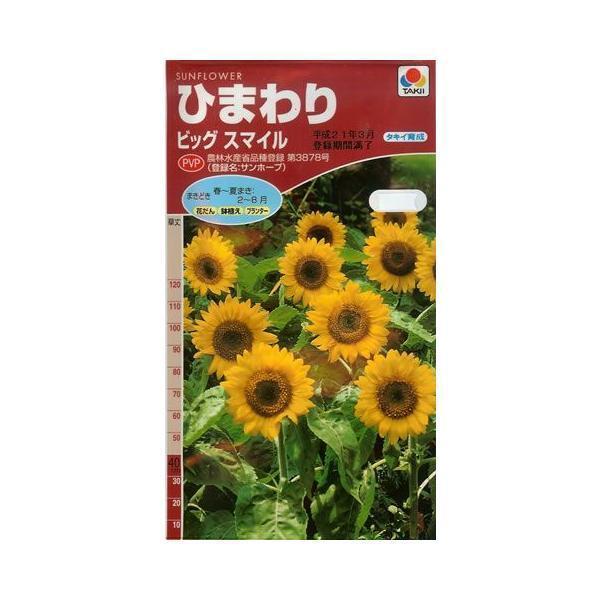 ひまわり ビッグスマイル(2.5ml)  〜花のタネ〜