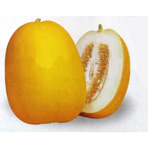 マクワ種 金太郎 (300粒) [栽培用 種子 まくわうり マクワウリ 真桑瓜 生産者向け]